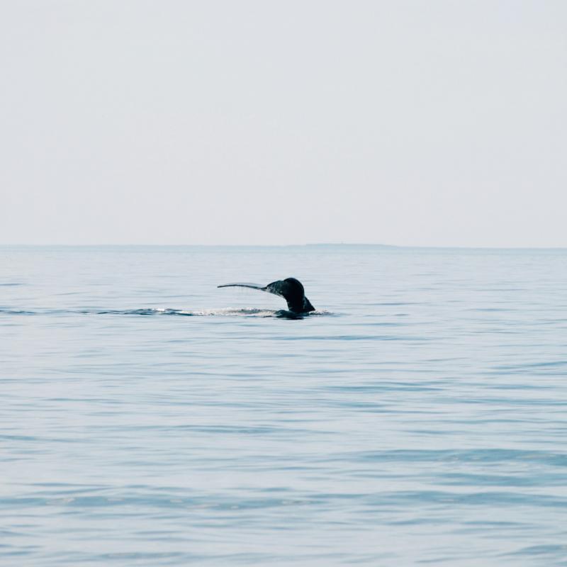 fiche-projet-baleines
